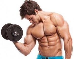 Muskeln von Musculin Active